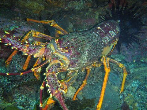 Crayfish - Vilo Blog