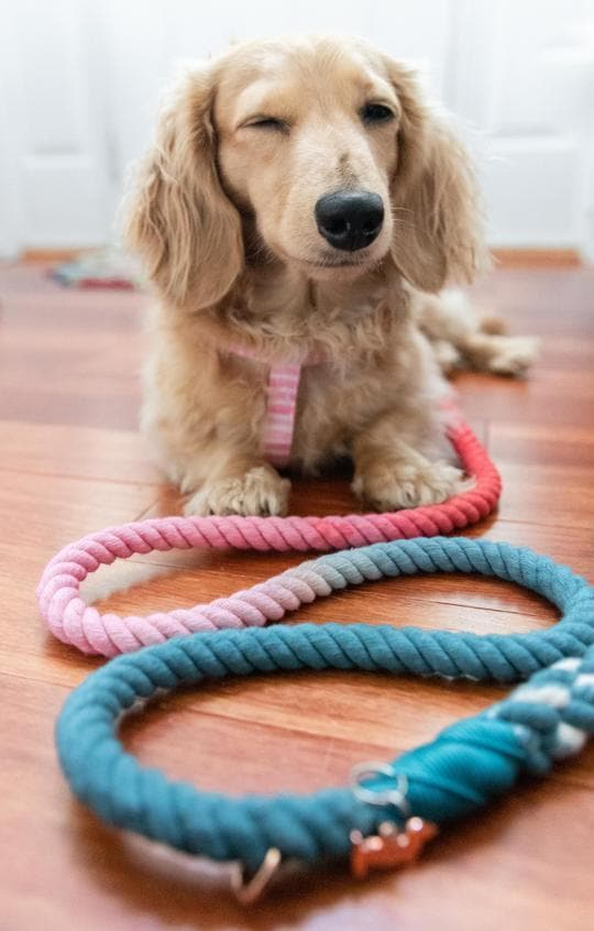 Jack & Jill Ombre Rope Leash