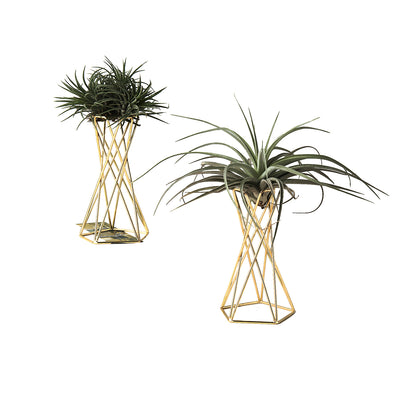 Pack of 2 Air Plant Stand Air Plant Holder Tillandsia Streptophylla Stand