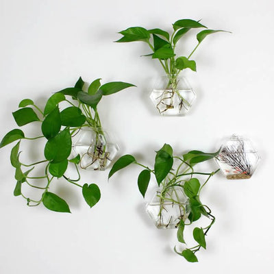 Set of 4 Wall Planters Glass Hanging Plant Terrariums