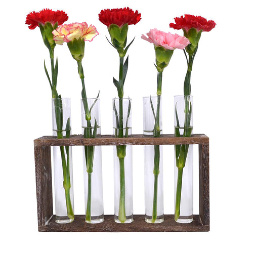 Wall Hanging Planter Glass Terrarium in Wood Stand with 5 Test Tube