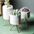 Modern Succulent Planter Pack of 3 Ceramics Container with Iron Rack Rose Golden Planters
