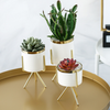 Pack of 3 Modern Indoor Planters Fashion Succulent Planter Golden Edge Container with Iron Rack