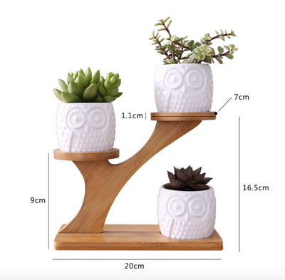 Cute Owl Succulent Planter Set with Bamboo Holder Modern Home Decorative Planters