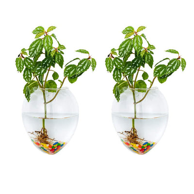 Pack of 2 Wall Hanging Planters Hanging Glass Plant Pots Wall Glass Terrariums