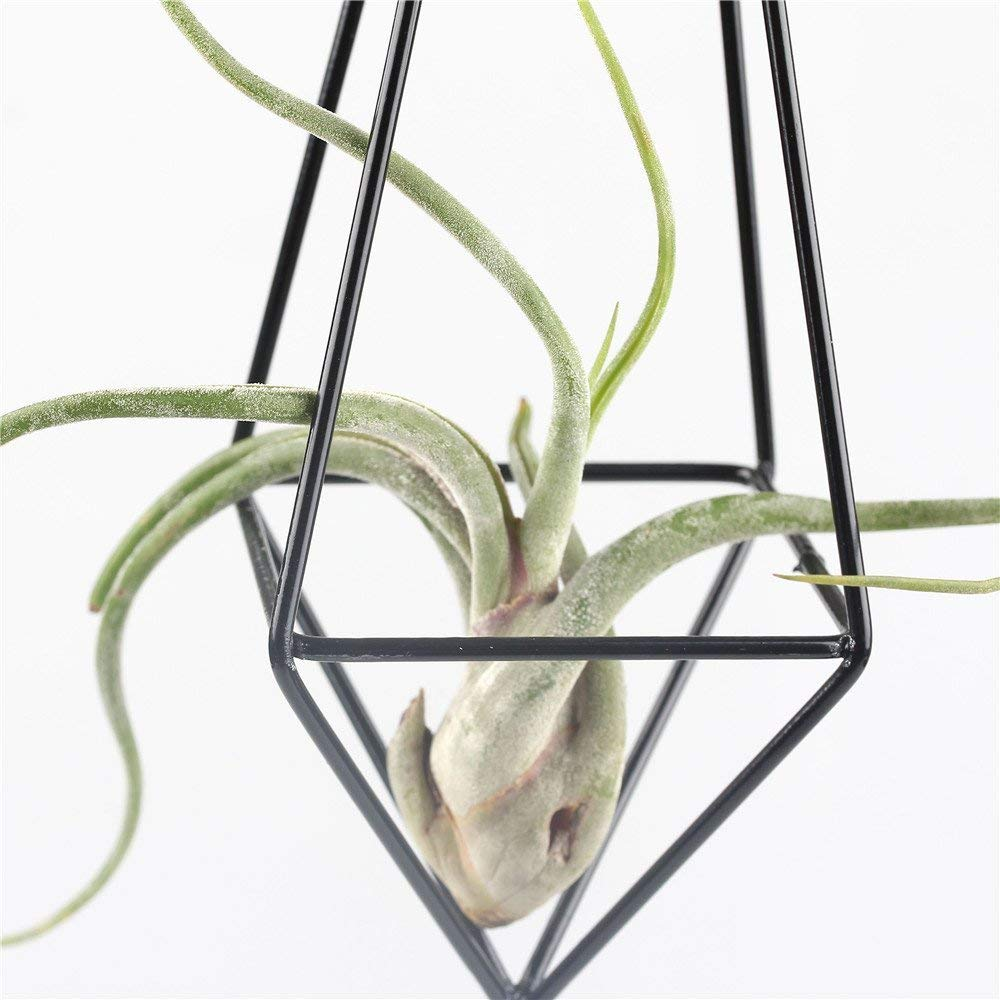 Air Plant Hanger Planter Air Plant Holder 10 inches length