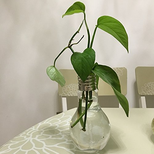 Decorative Bulb Glass Plant Pots Glass Vases Tabletop Glass Plant Container