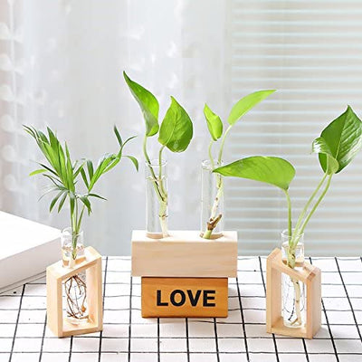 Set of 2 Tabletop Glass Terrarium in Wood Stand Indoor Glass Planter