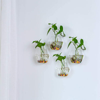 Pack of 6 Wall Hanging Glass Planters Hexagonal Shape Glass Terrariums