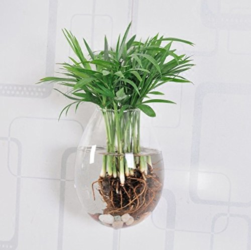 5 Packs Wall Hanging Planters Glass Plant Pots Water Plant Containers Glass Vases