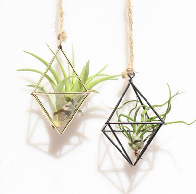 Metal Hanging Air Plant Holder Air Plant Tillandsia Container