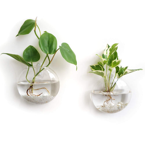 Pack of 2 Gladd Wall Hanging Planters Glass Plant Terrarium Indoor Planters, 4.72""