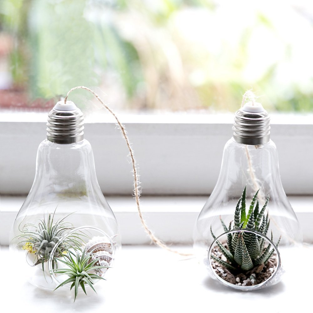 Pack of 3 Glass Hanging Planters Air Plant Glass Terrariums