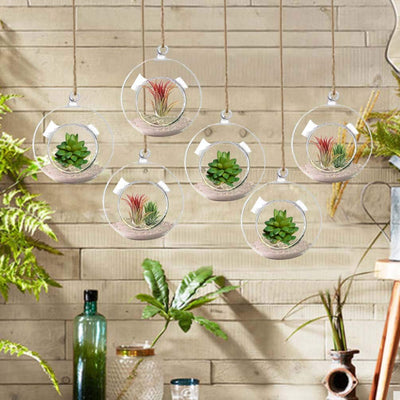 Pack of 3 Glass Hanging Air Plant Containers Hanging Glass Plant Containers