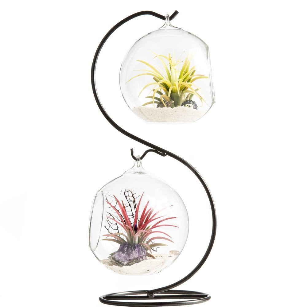 Air Plant Holder Air Plant Container Tabletop Glass Air Plant Terrariums with Metal Stand