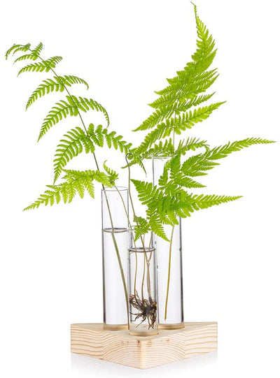 Glass 3 Test Tube Bud Vase in Wooden Stand Glass Terrarium