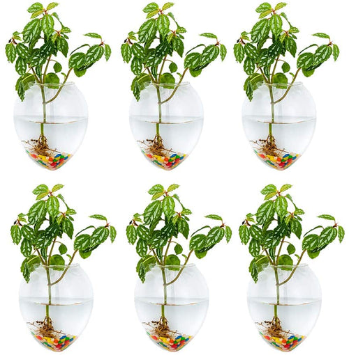 Set of 6 Wall Hanging Planters Hanging Glass Plant Pots Wall Glass Terrariums