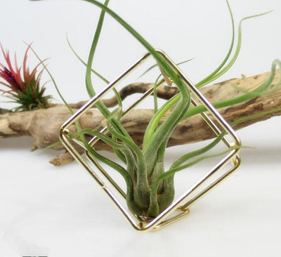 Rustic Style Hanging Air Plant Holder Air Plant Tillandsia Rack