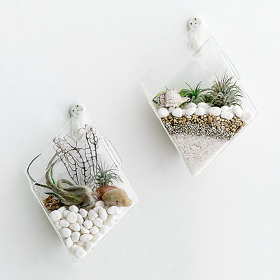 Pack of 2 Wall Hanging Planter Glass Terrarium Planter Hanging Plant Container