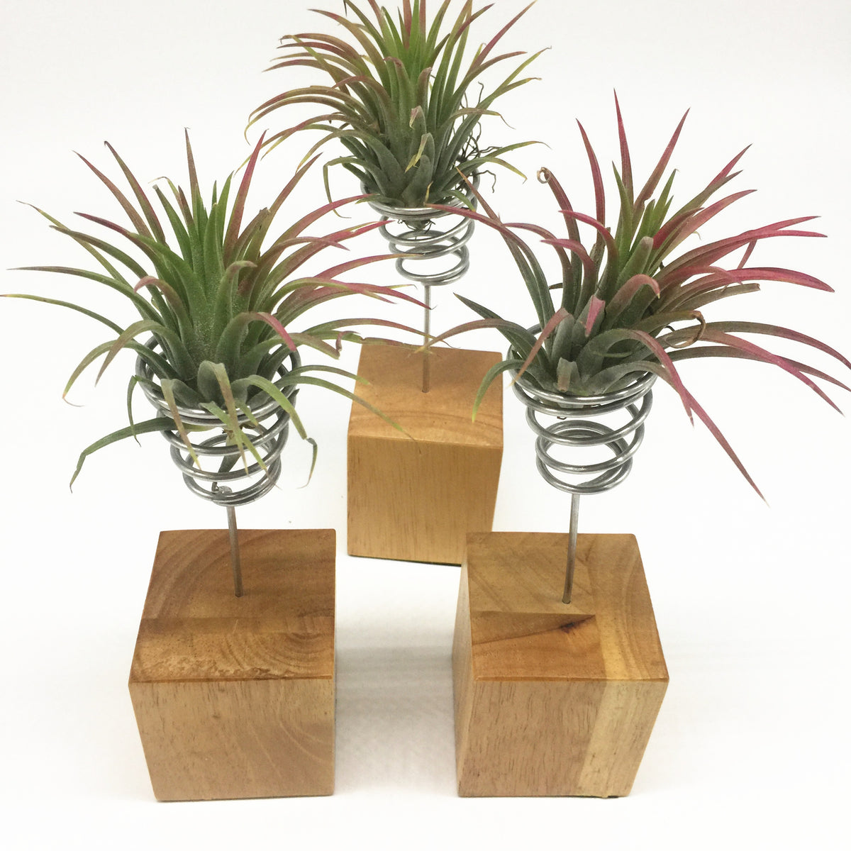 Pack of 3 Wood Base Air Plant Stand Air Plant Holder