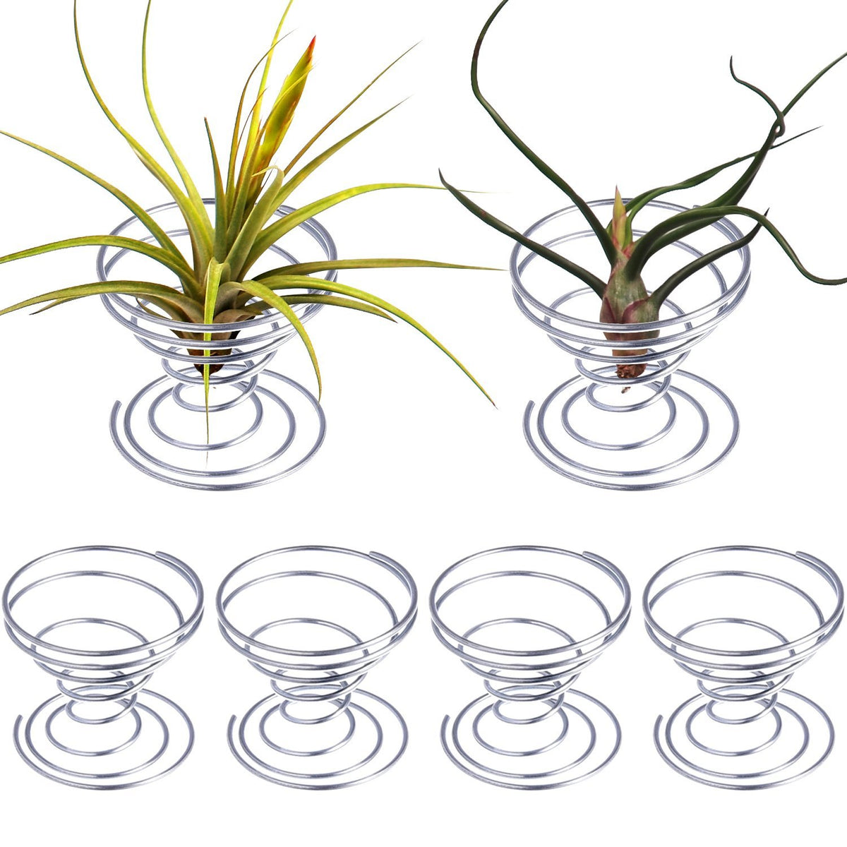 Pack of 6 Small Air Plant Holder Air Plant Base Tillandsia ionantha Fuego Planter Tillandsia Container