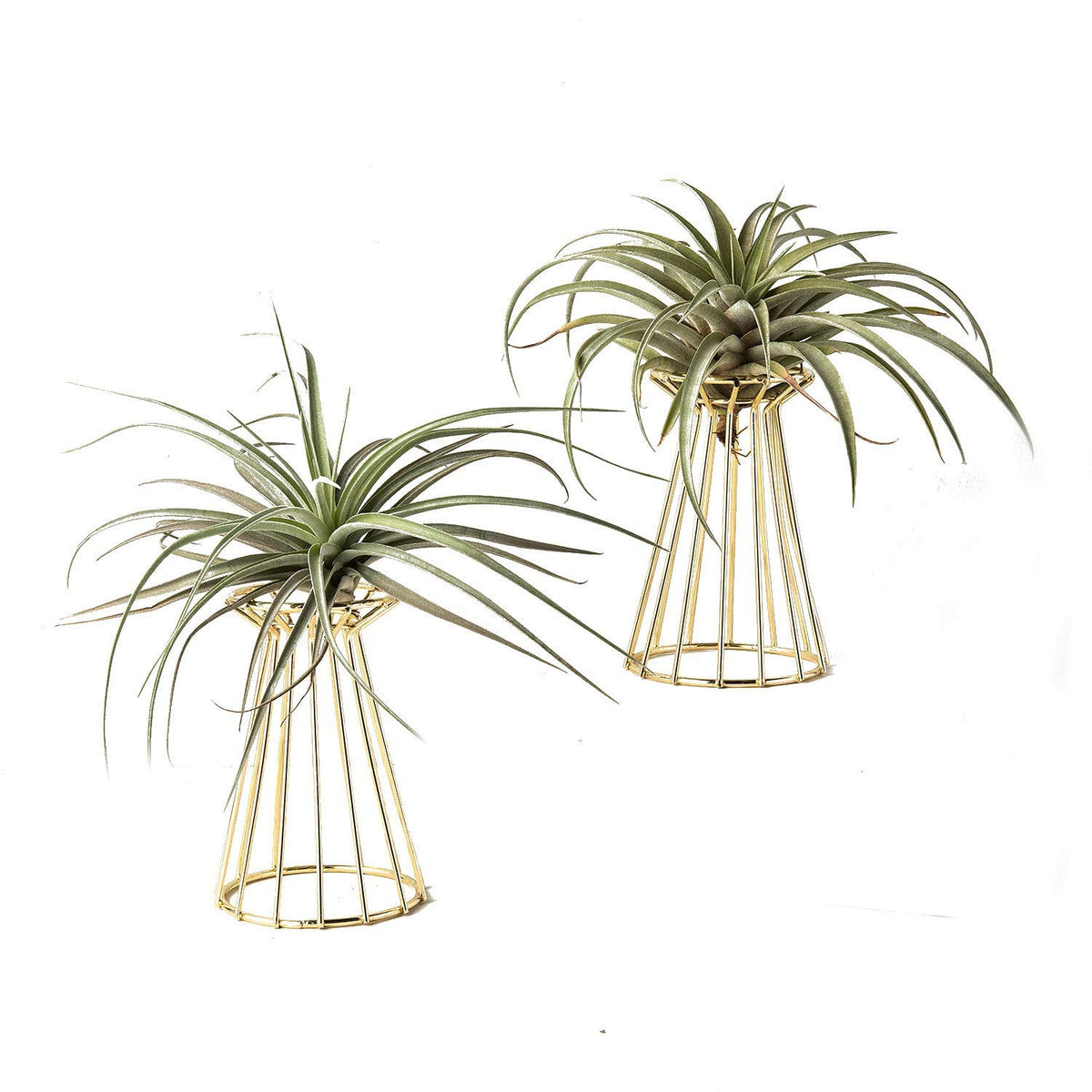 Set of 2 Decorative Air Plant Holder Tillandsia Air Plant Stand Big Streptophylla Stand