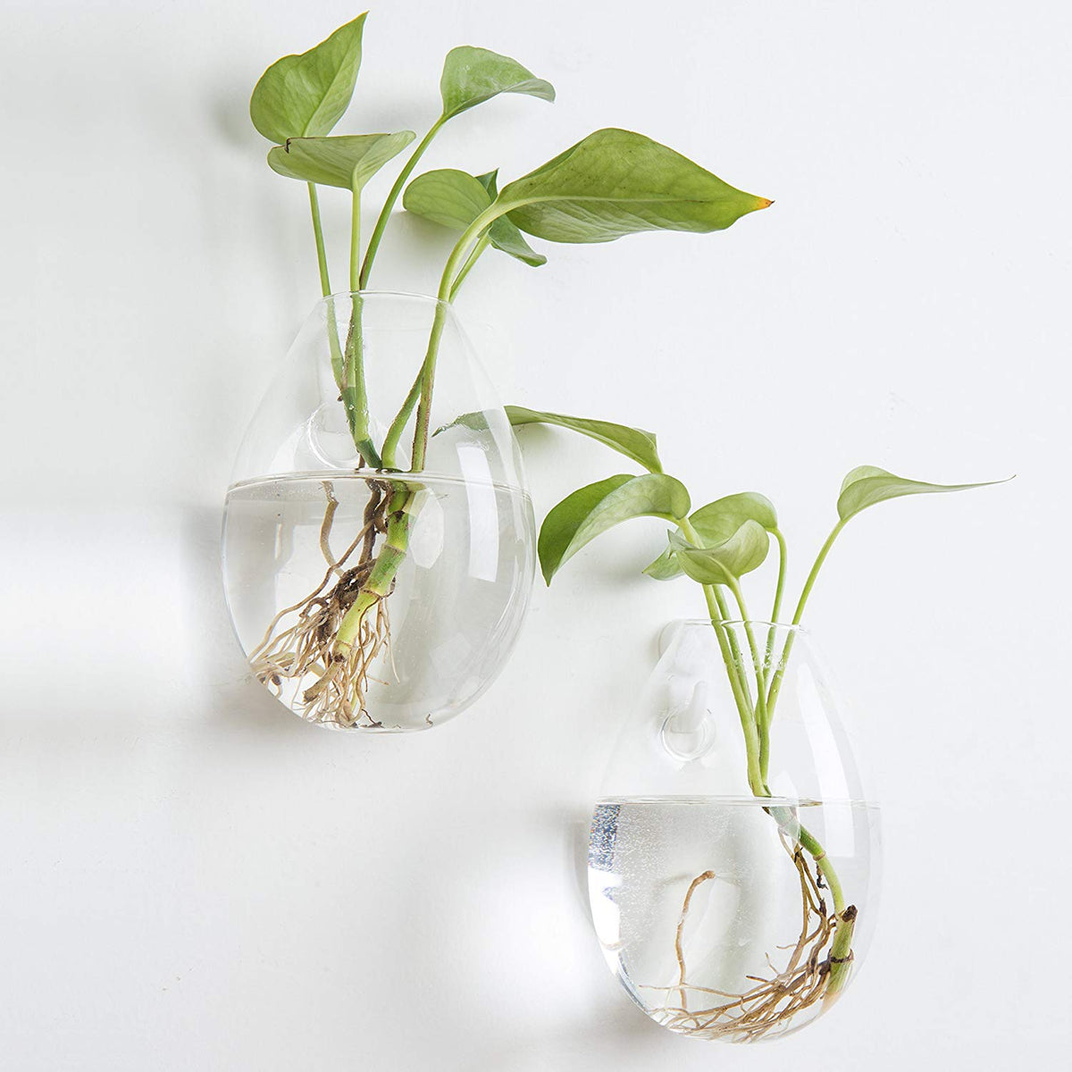 Set of 2 Wall Hanging Planters Glass Plant Terrariums