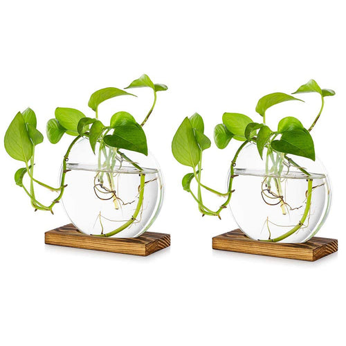 Pack of 2 Tabletop Glass Planter with a Wood Stand Indoor Glass Planters
