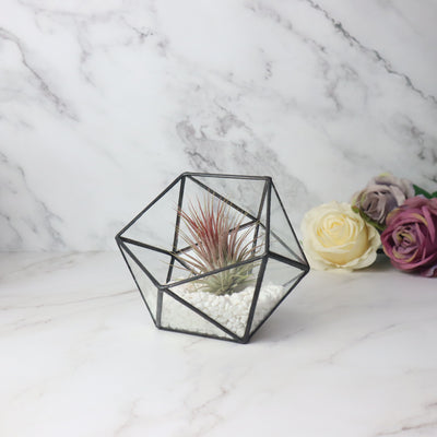 Geometric Glass Terrarium for Succulent Plant Cacti Fern Flower