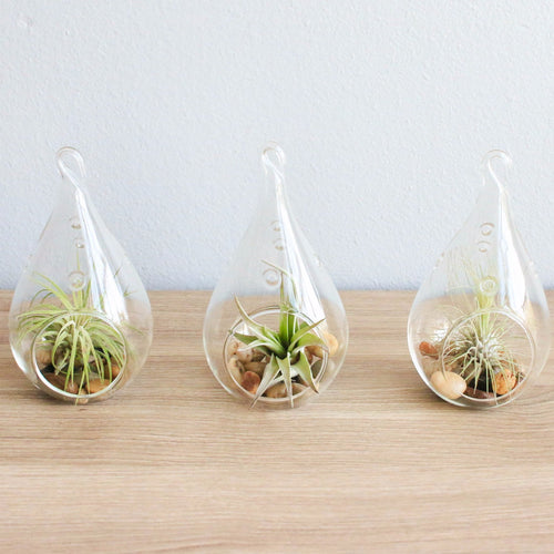 Set of 3 Teardrop Air Plant Terrariums Hanging Glass Planters