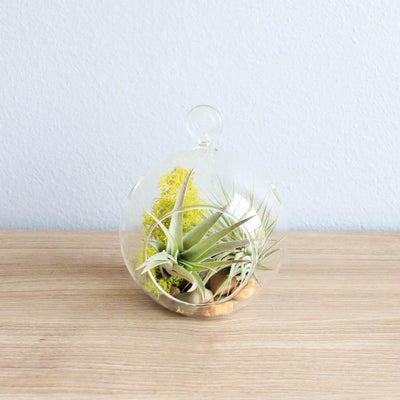 "Pack of 4 Hanging Glass Plant Terrariums Glass Hanging Planters Hanging Air Plant Terrariums, 5"" Diameter"