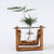 Desktop Plant Terrarium Glass Planter Bulb Vase with Retro Solid Wooden Stand and Metal Swivel Holder for Hydroponics Plants