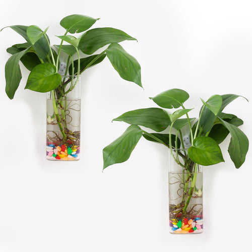 Pack of 2 Wall Hanging Planters Glass Plant Terrarium