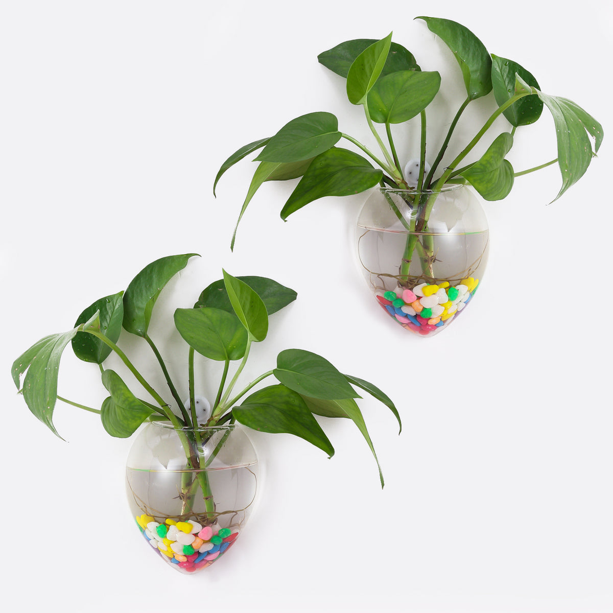 Wall Hanging Planters Hanging Glass Plant Pots Wall Glass Terrariums