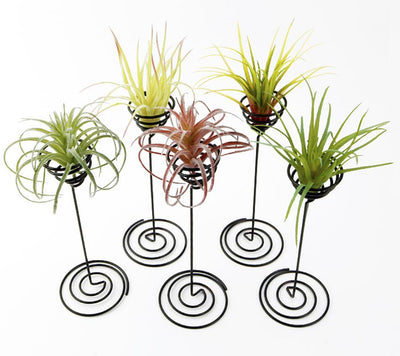 Pack of 4 Tabletop Standing Air Plant Holders Tillandsia Air Plant Stands