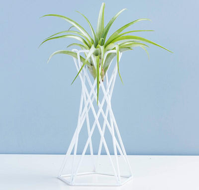 Tabletop Metal Air Plant Stand Big Air Plant Tillandsia Stand