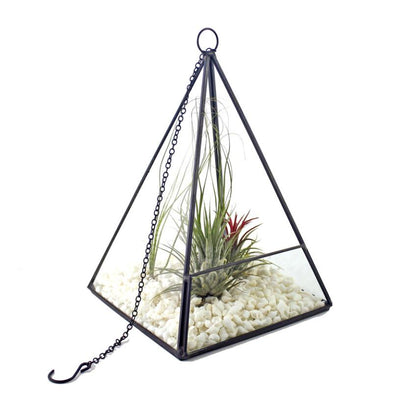 Tabletop Glass Geometric Terrarium DIY Plant Pot Glass Terrariums