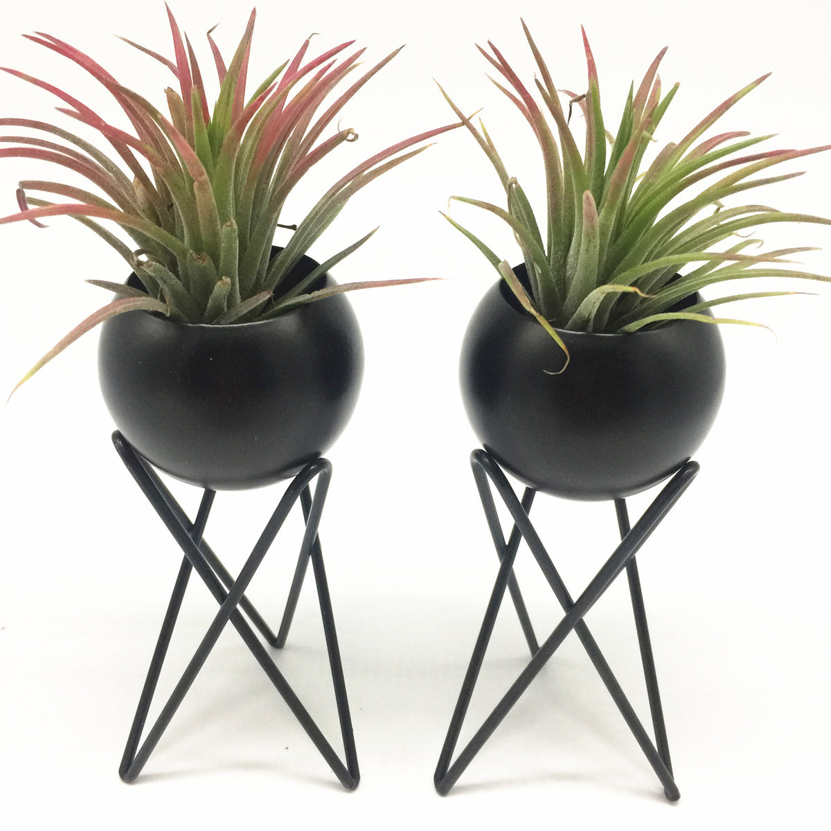 Pack of 2 Tabletop Standing Air Plant Holder Air Plant Stand Air Plant Tillandsia Container