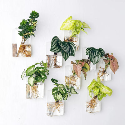 Pack of 8 Wall Hanging Planters Glass Hanging Plant Containers Glass Air Plant Terrariums