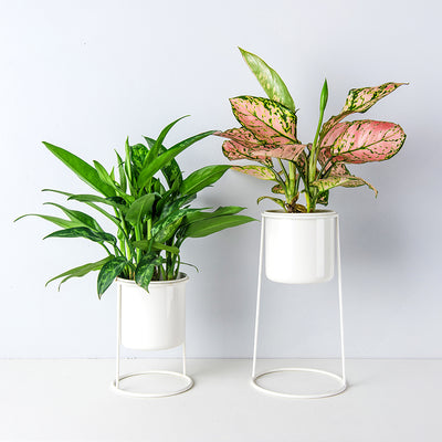 Pack of 2 Standing Plant Containers Standing Planters Air Plant Stand Plant Holders, One Tall Planter and One Short Planter