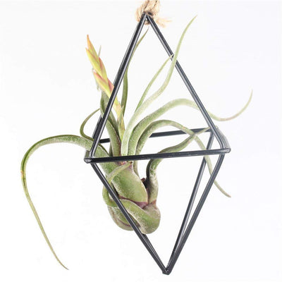 Rustic Style Hanging Planter Air Plant Holder Air Plant Container