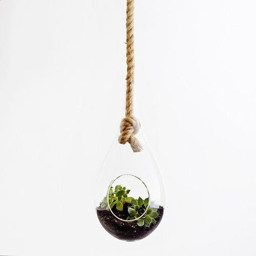 Hanging Glass Terrarium Air Plant Glass Planter with Rope Included.
