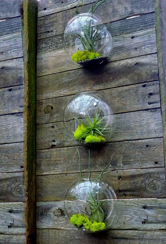 Pack of 6 Wall Hanging Planters Round Glass Plant Pots Hanging Flower Vase