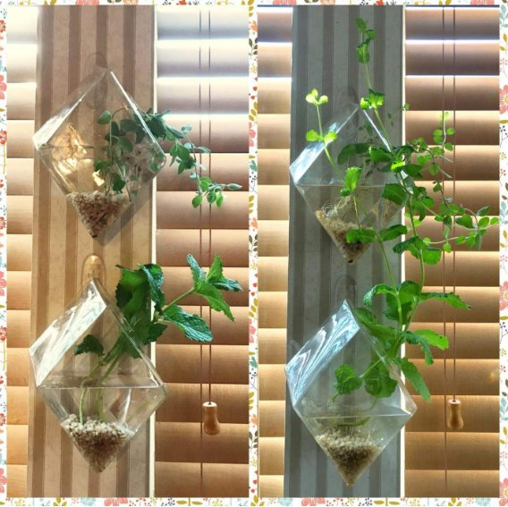 Pack of 4 Wall Hanging Planters Plant Terrariums Air Plant Containers