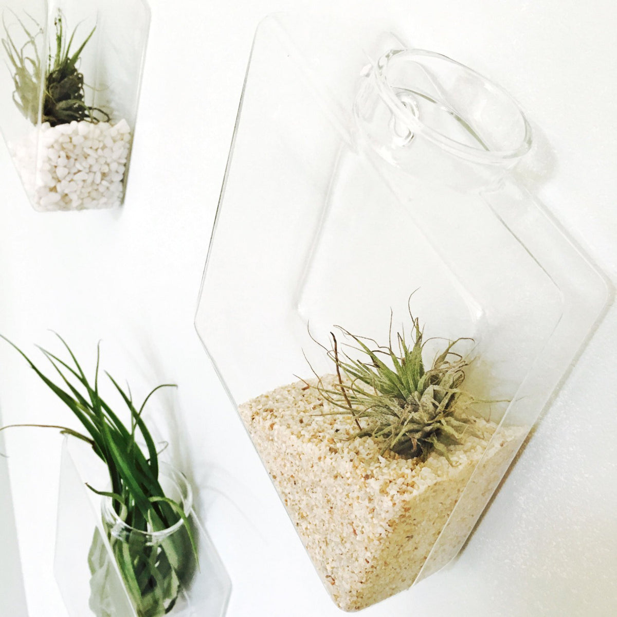Pack of 10 Wall Hanging Air Plant Terrariums Air Plant Containers Glass Hanging Planters