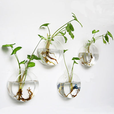 Set of 4 Wall Hanging Planters Glass Plant Pot Plant Terrarium Glass Terrariums
