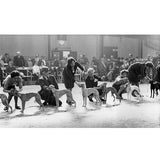 Shirley Baker: Dog Show 1961 - 1978