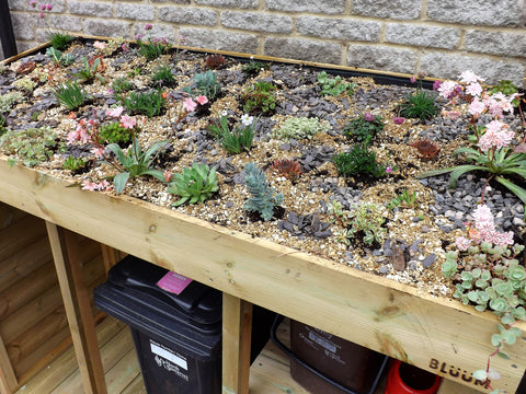 Tidy wheelie bin storage box unit with living green roof planter. Holds wheelie bins, recycling boxes and food waste bin
