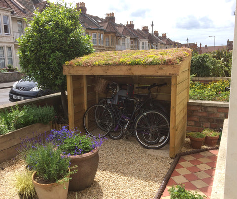 Bristol bike shelter with sedum blanket in the green roof planting area. Front garden of a Victorian terraced home.