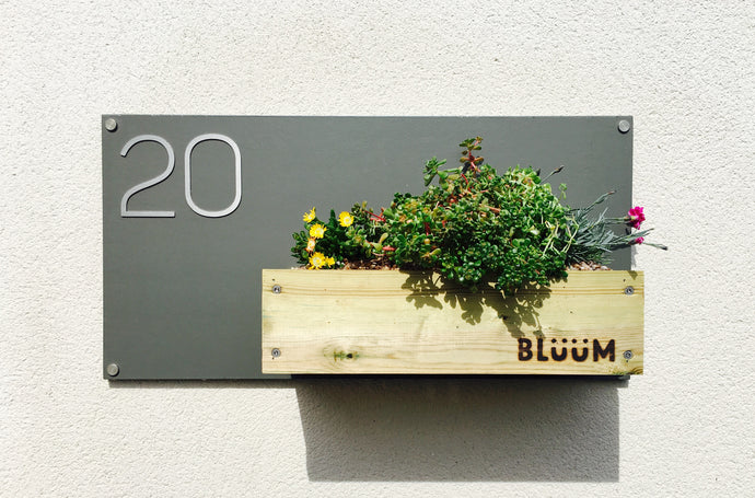 Bluum Stores contemporary house number sign with planter for succulents and sedum